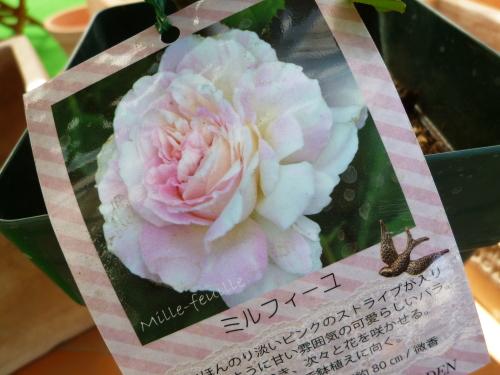 ブログ ミルフィーユ4