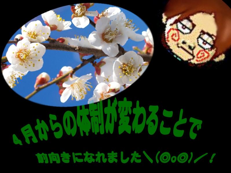 haruのコピー