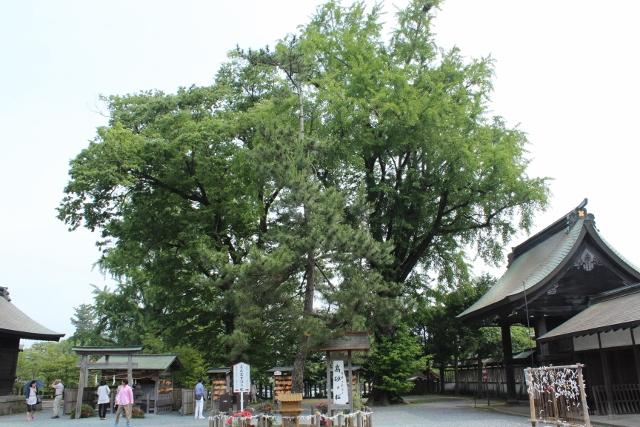 阿蘇神社4