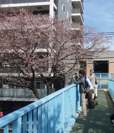 2014桜3
