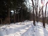 尾根上の雪