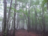 熊倉山からの下り