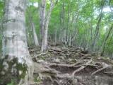 木の根と岩が露出する山肌