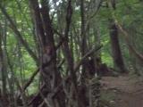 登山道脇のサル