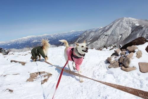 IMG_0727地蔵岳