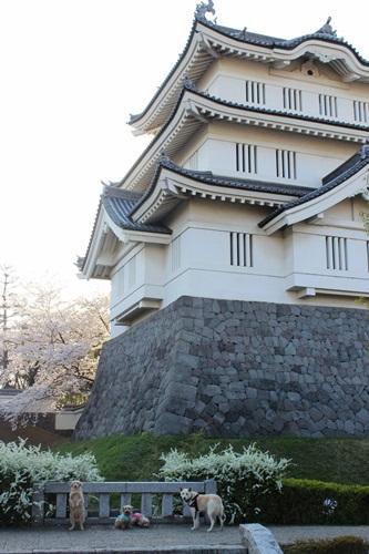IMG_1270忍城