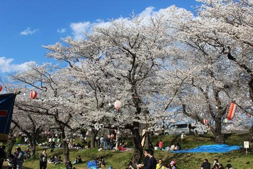 IMG_1297桜