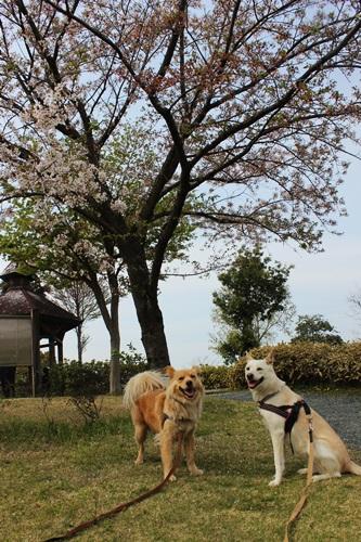 IMG_1506平成の森