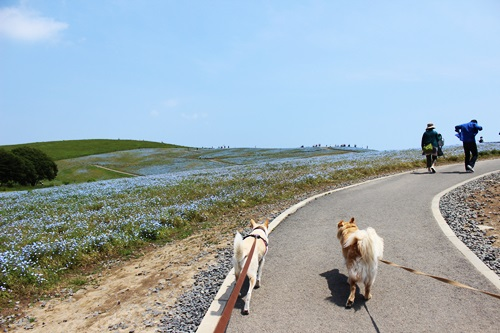IMG_2579海浜