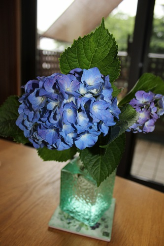 IMG_2843紫陽花