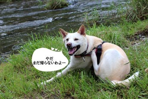 IMG_3282三波
