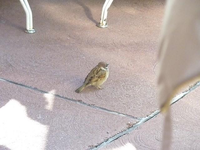 ランドにいた鳥達 (1) (コピー)