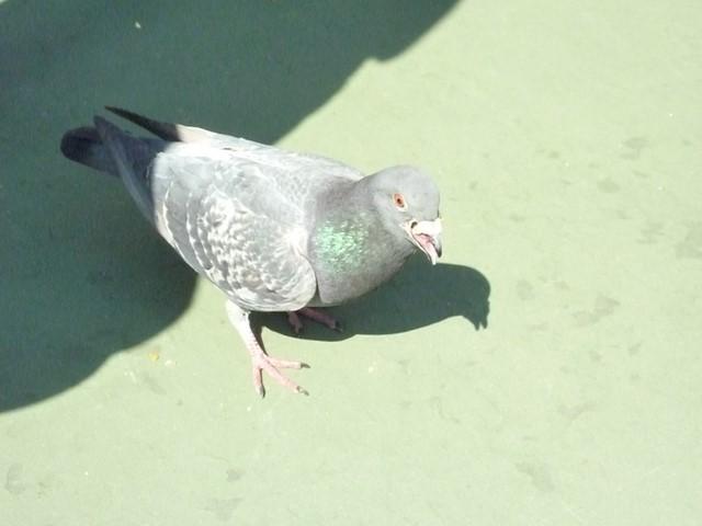 ランドにいた鳥達 (6) (コピー)