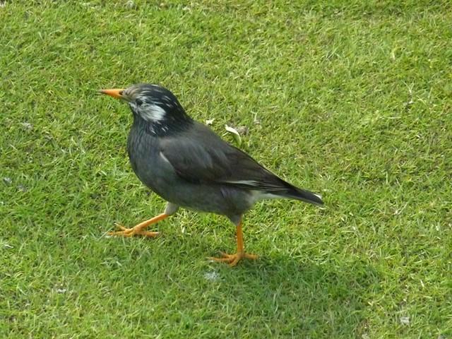 ランドにいた鳥達 (13) (コピー)
