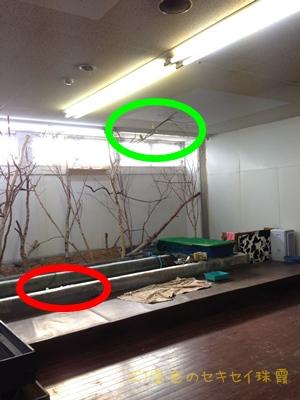 ペットランド 新発寒店 動物の自由な空間