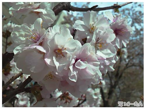 201404桜