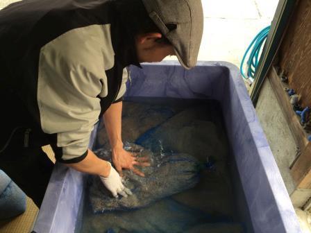 コシ浸水2