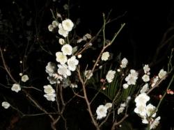 夜の梅 2014.2.25