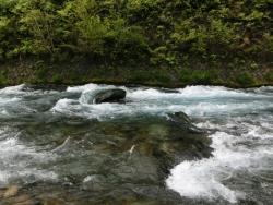 大谷川の清流