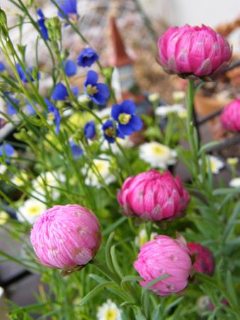 お花寄せ植え