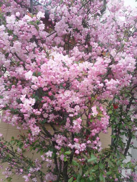 20140408_225650桜2014