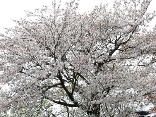 木曽川堤20141