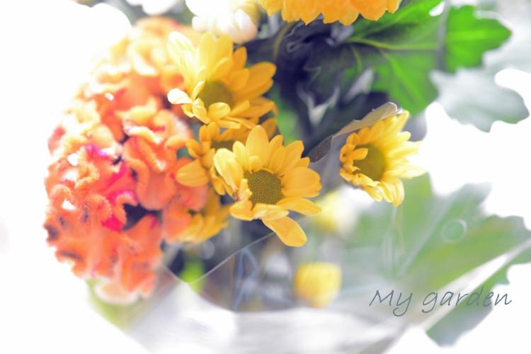 DSC_7861_01_20140824110627f7e.jpg