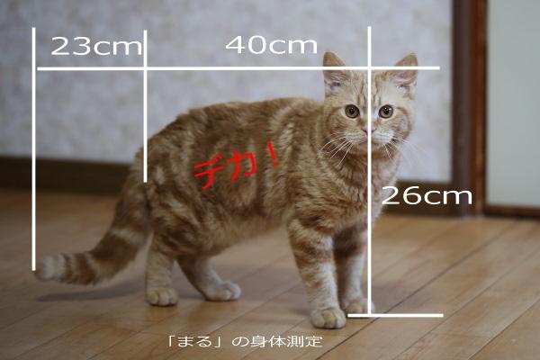 まるの身体測定