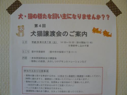 6月7日豊中市保健所 犬猫譲渡会
