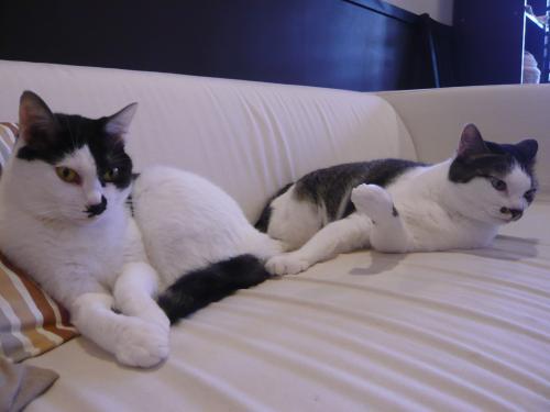 レアとモアニ