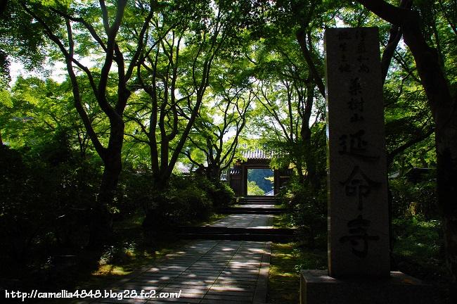0721enmeiji-7.jpg