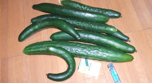 cucumber01.jpg