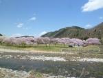 道の駅 桜並木