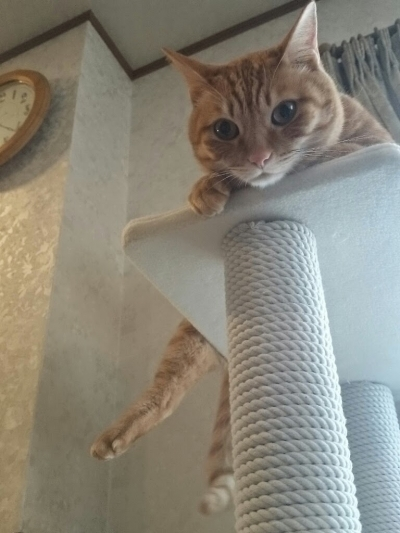 かしこな猫3