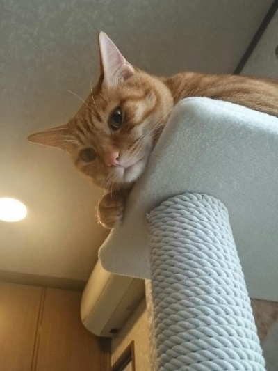 かしこな猫2