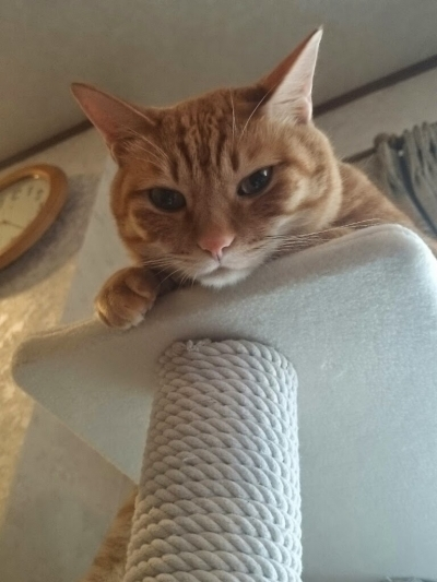 かしこな猫1