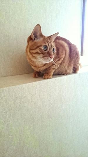 男前な猫1