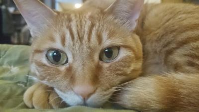 退屈な猫3