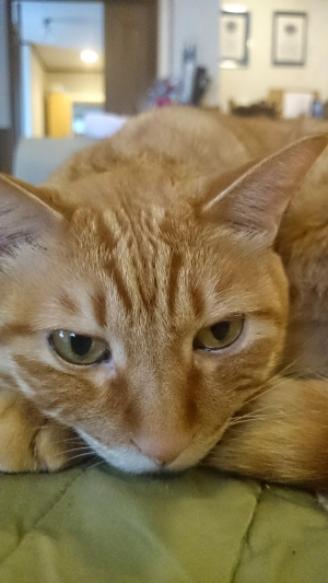 退屈な猫2
