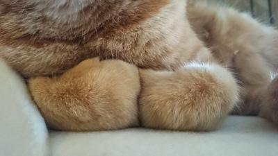 ぎゅっとな猫3