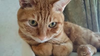 ぎゅっとな猫2