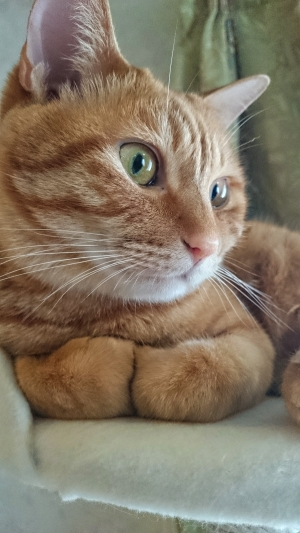 ぎゅっとな猫1