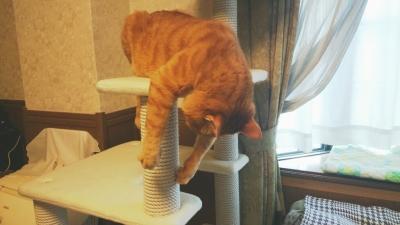 前足が自由な猫2