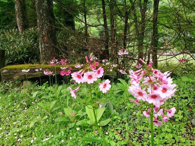 10温泉寺に咲く花