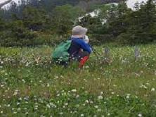 花の中の木道で思案中の元少女