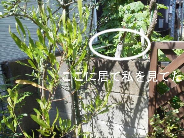 20140807脱走 (2)