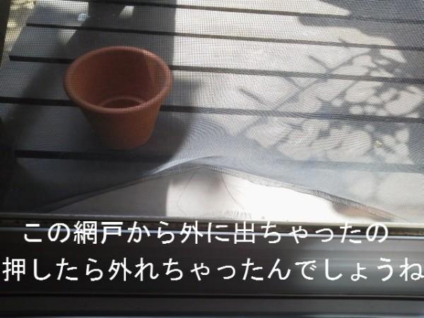 20140807脱走 (5)