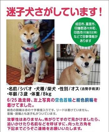 A4_shibao_4af.jpg
