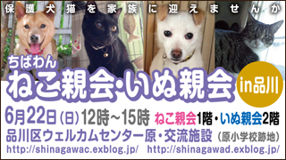 shinagawa45_320x180.jpg