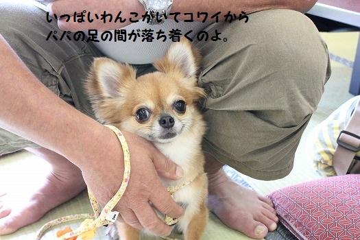 IMG_0437え